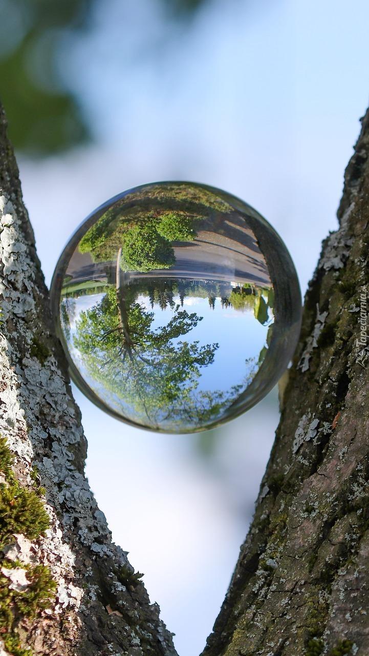 Drzewo i krzewy w szklanej kuli