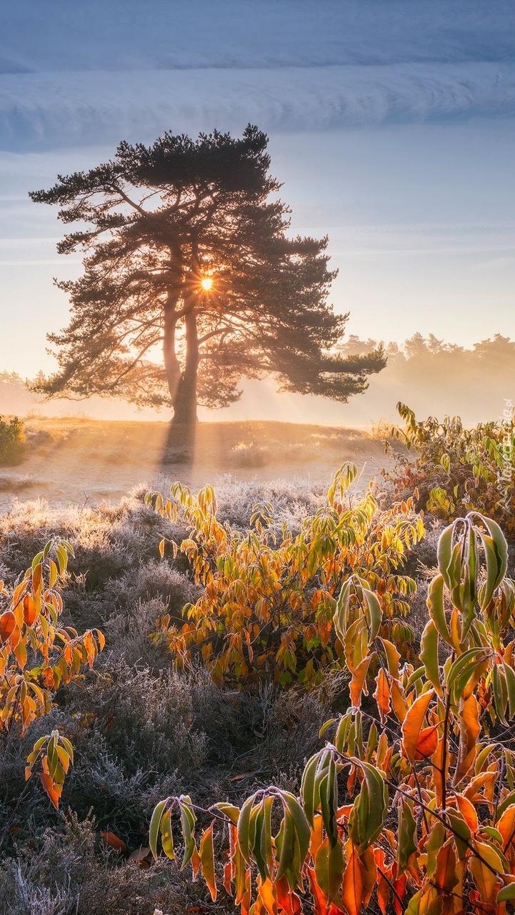 Drzewo i oszronione rośliny w słońcu