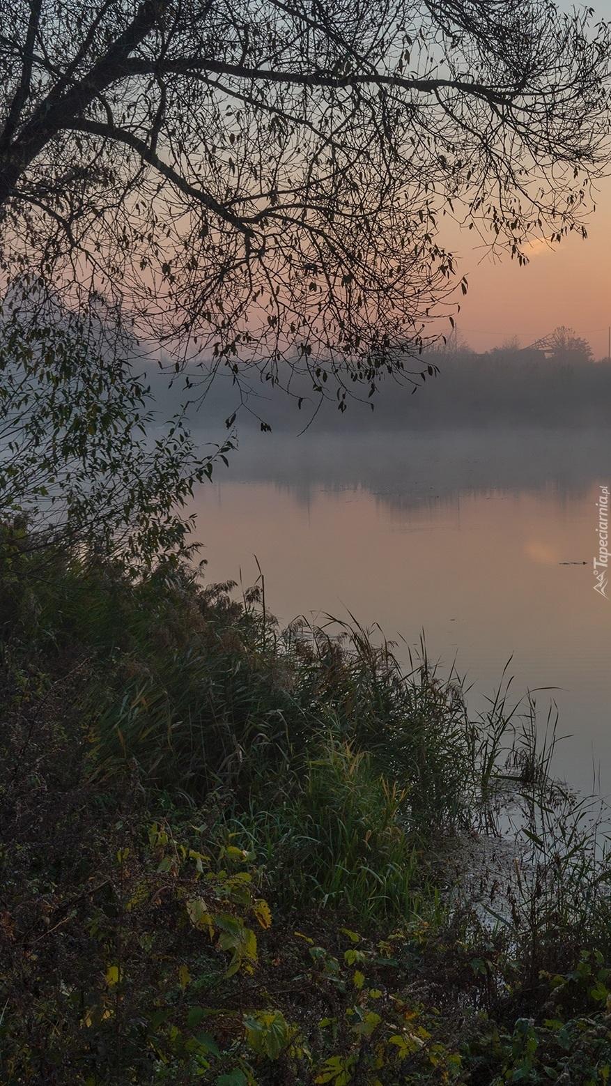 Drzewo i trawy nad brzegiem jeziora
