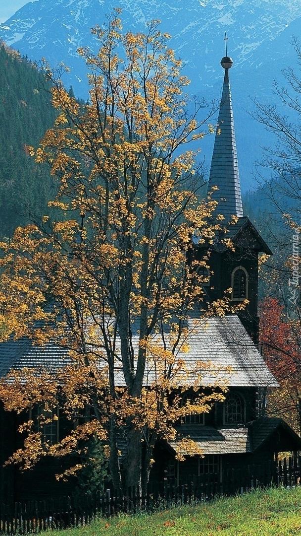 Drzewo jesienne obok kościoła