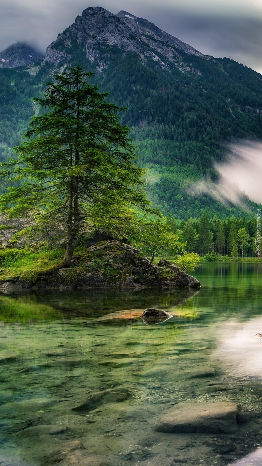 Drzewo na brzegu górskiego jeziora