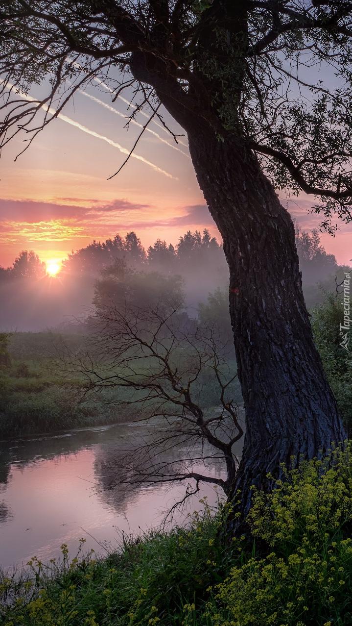Drzewo na brzegu rzeki