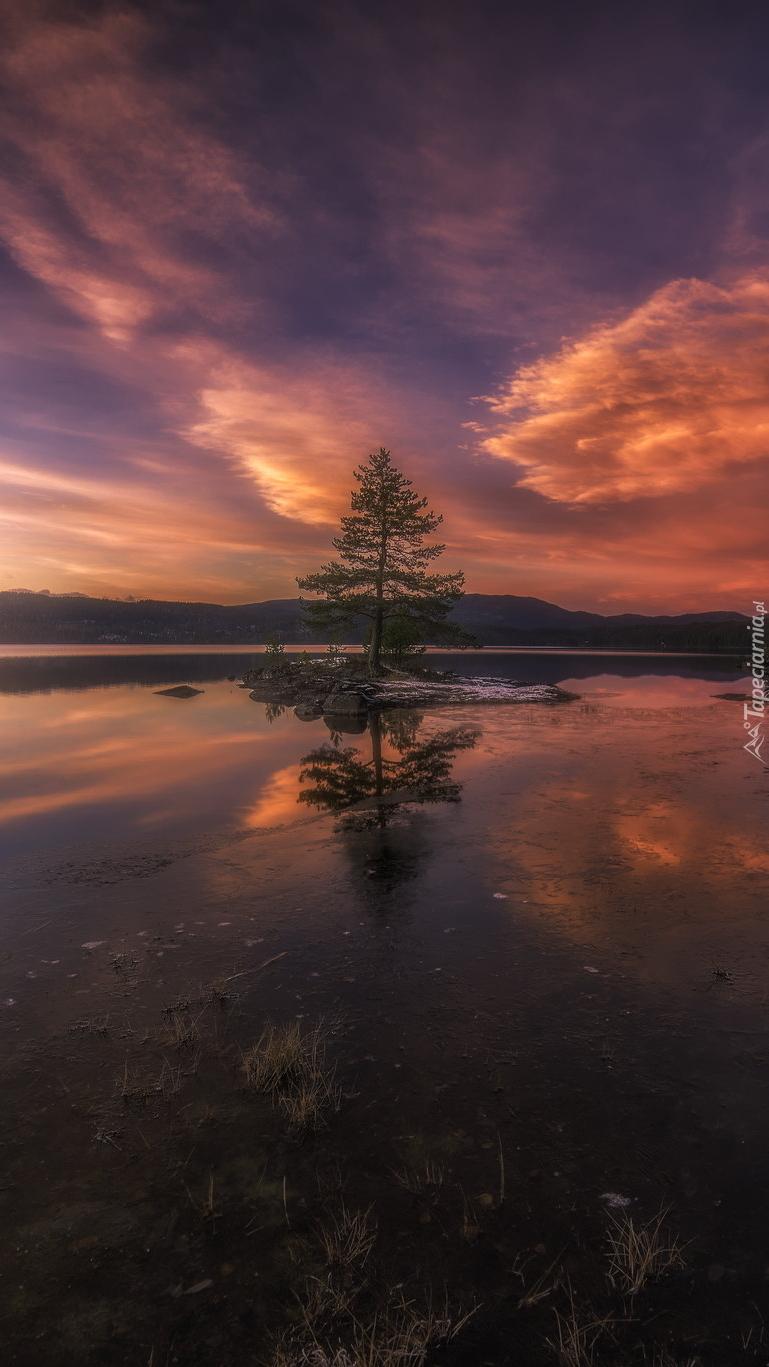 Drzewo na jeziorze