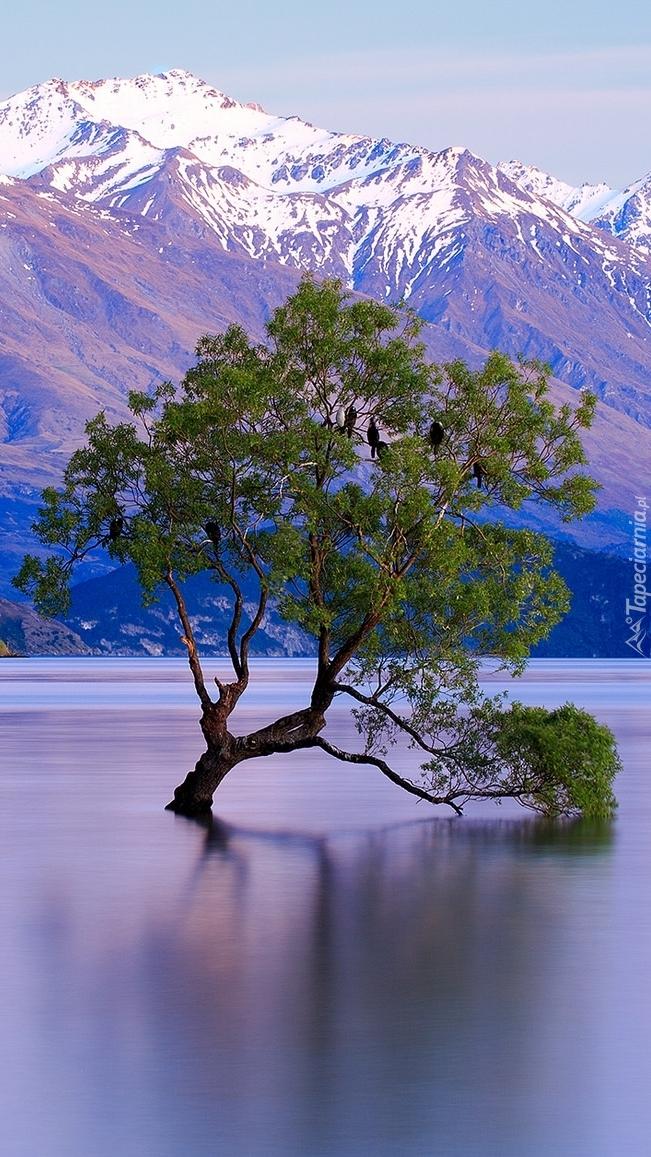 Drzewo na jeziorze Wanaka