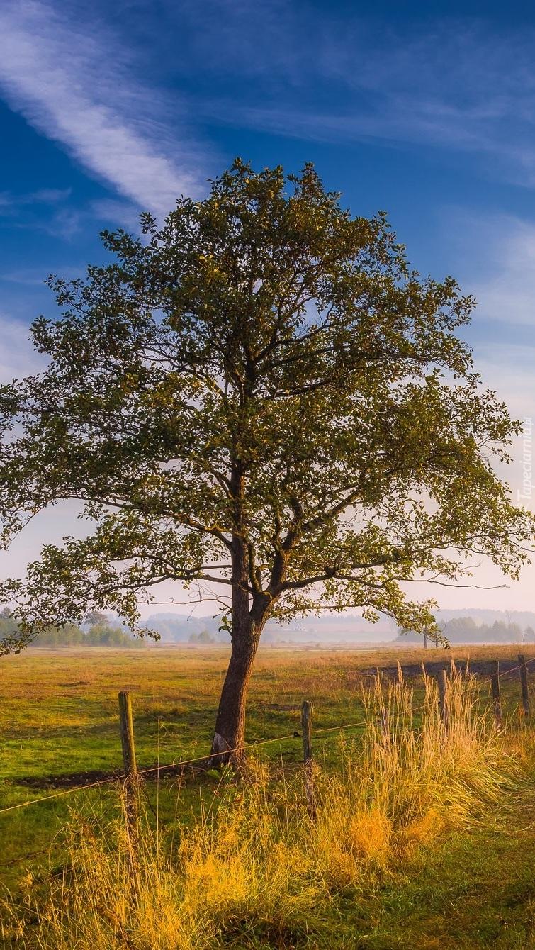 Drzewo na łące