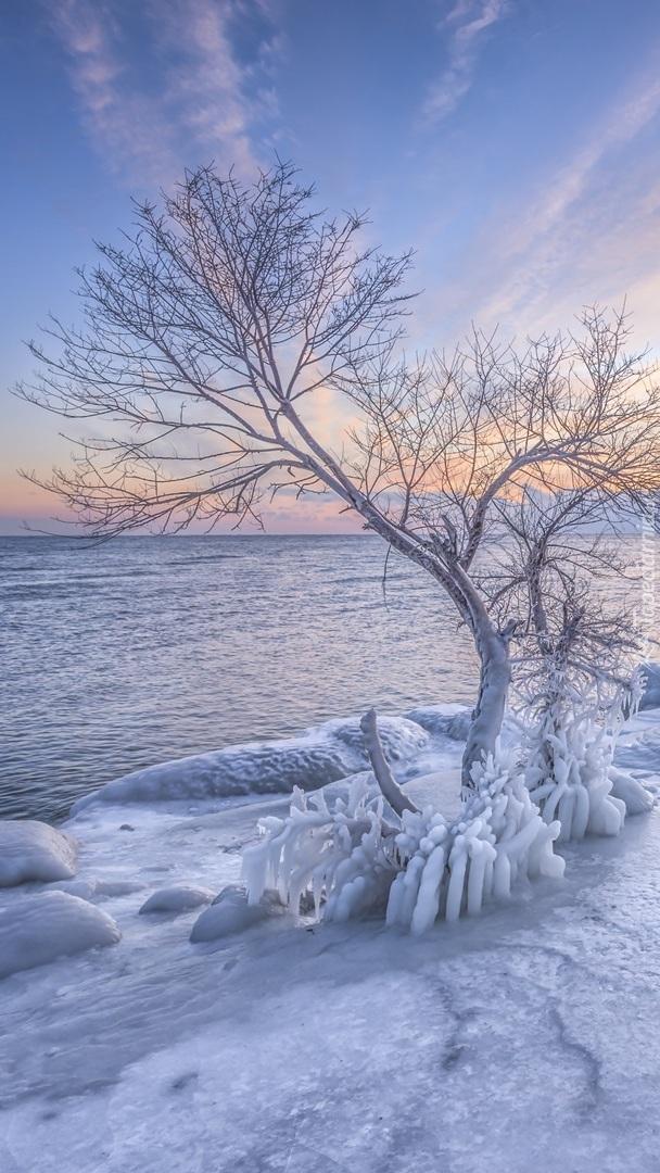 Drzewo na oblodzonym brzegu morza