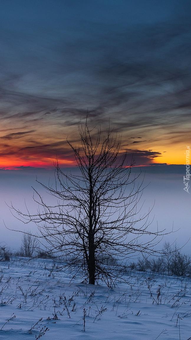Drzewo na ośnieżonym polu na tle mgły