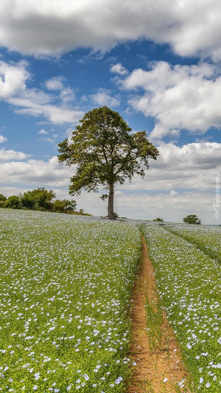 Drzewo na plantacji lnu