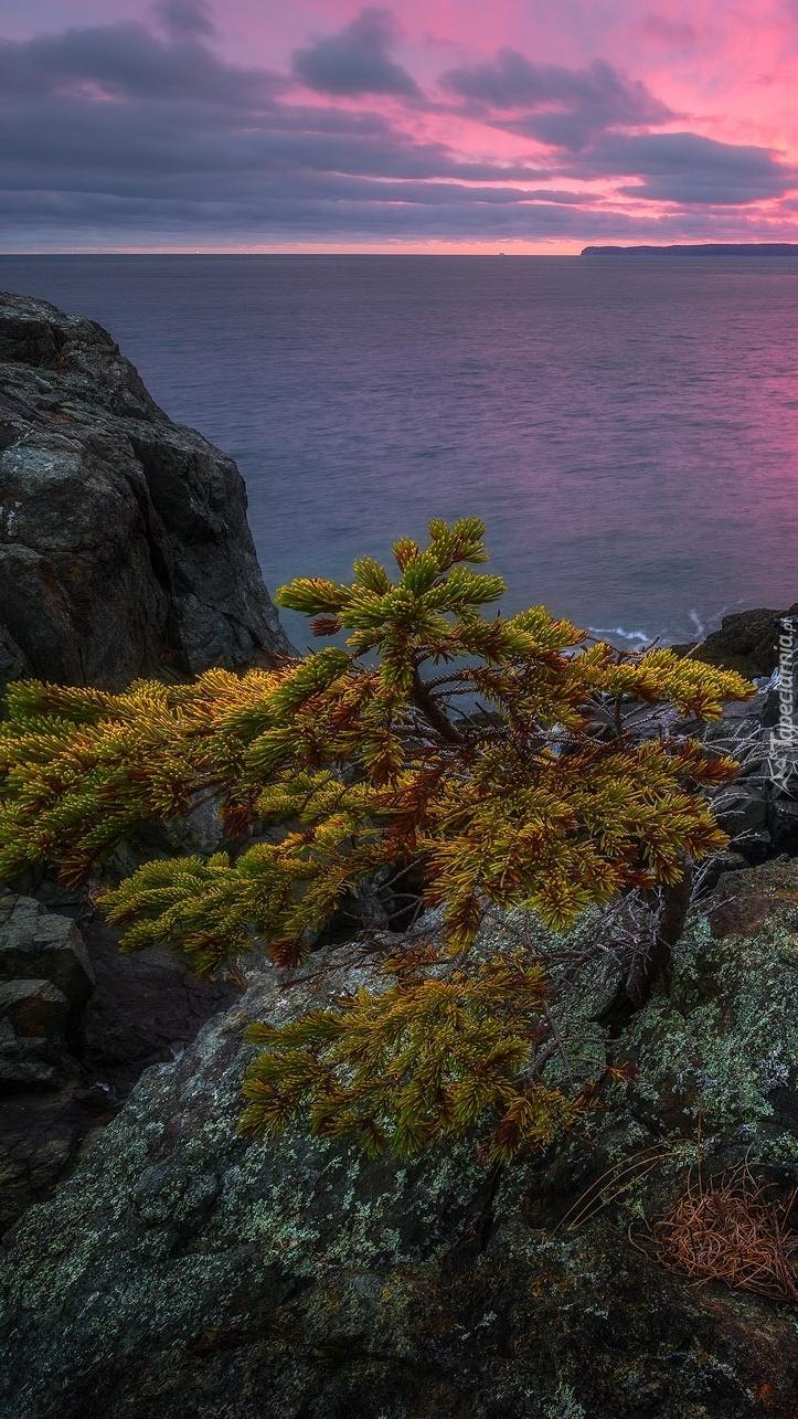 Drzewo na skałach