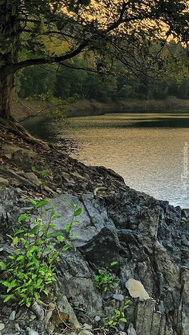 Drzewo na skałach nad jeziorem