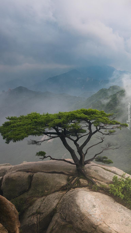 Drzewo na skale