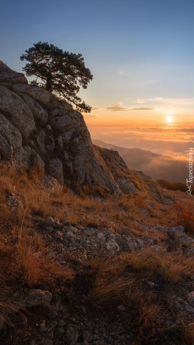 Drzewo na skale i widok na zachód słońca