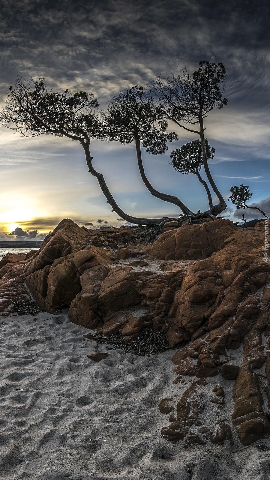 Drzewo na skale o wschodzie słońca