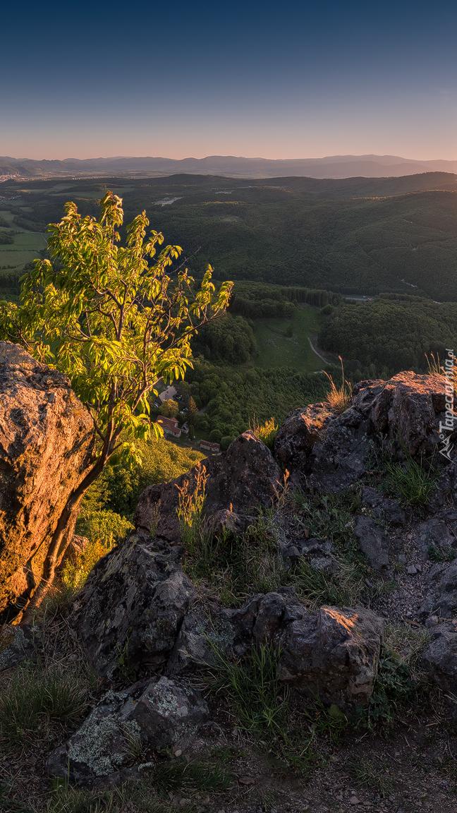 Drzewo na skale w górach