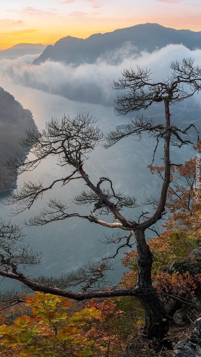Drzewo na skale z widokiem na rzekę w górach