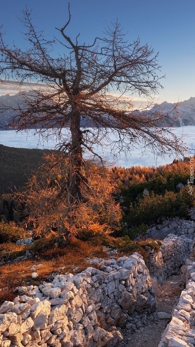 Drzewo na tle gęstej mgły w górach