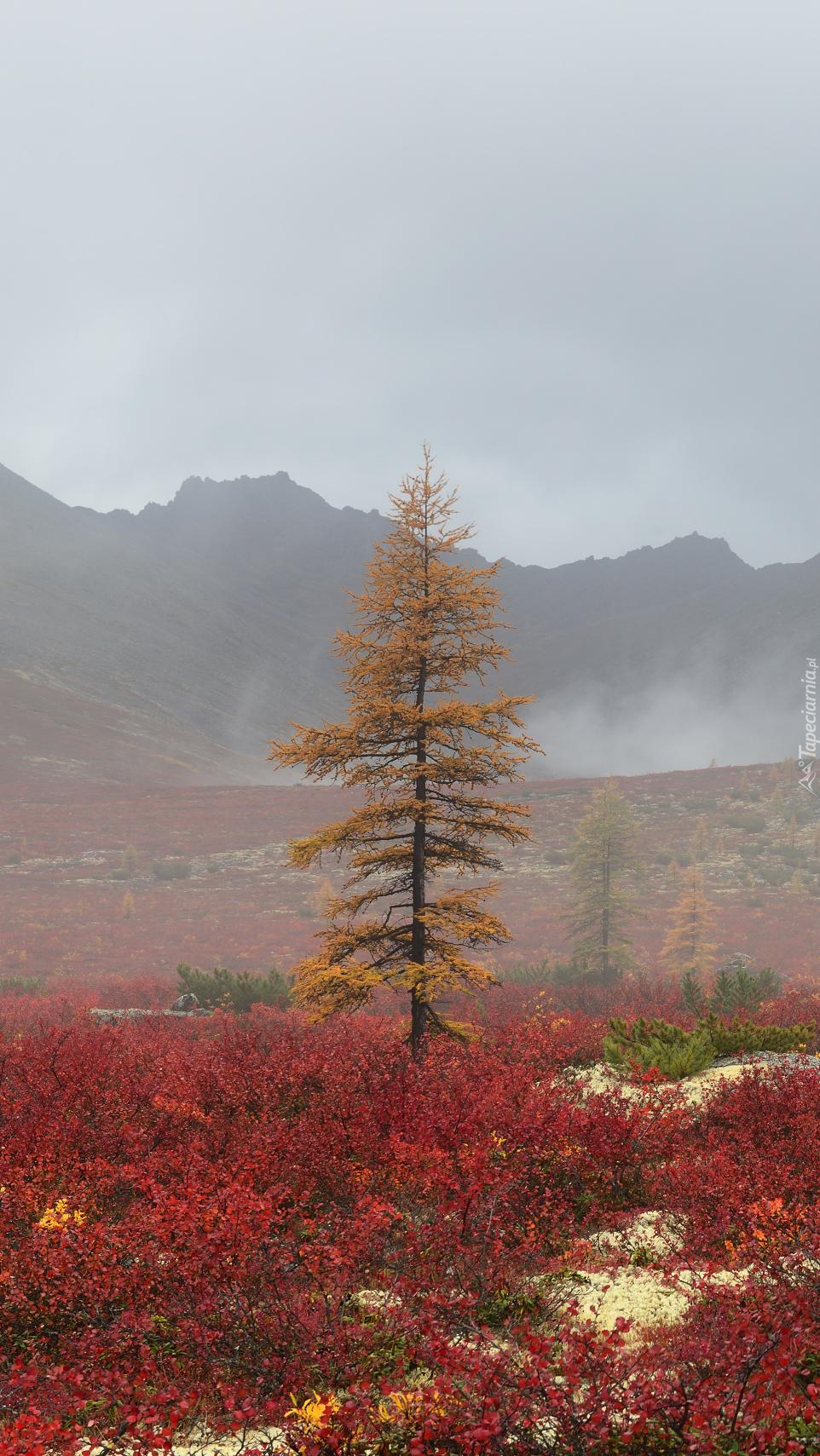 Drzewo na tle gór Kołymskich