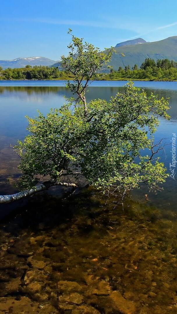 Drzewo na tle jeziora i gór