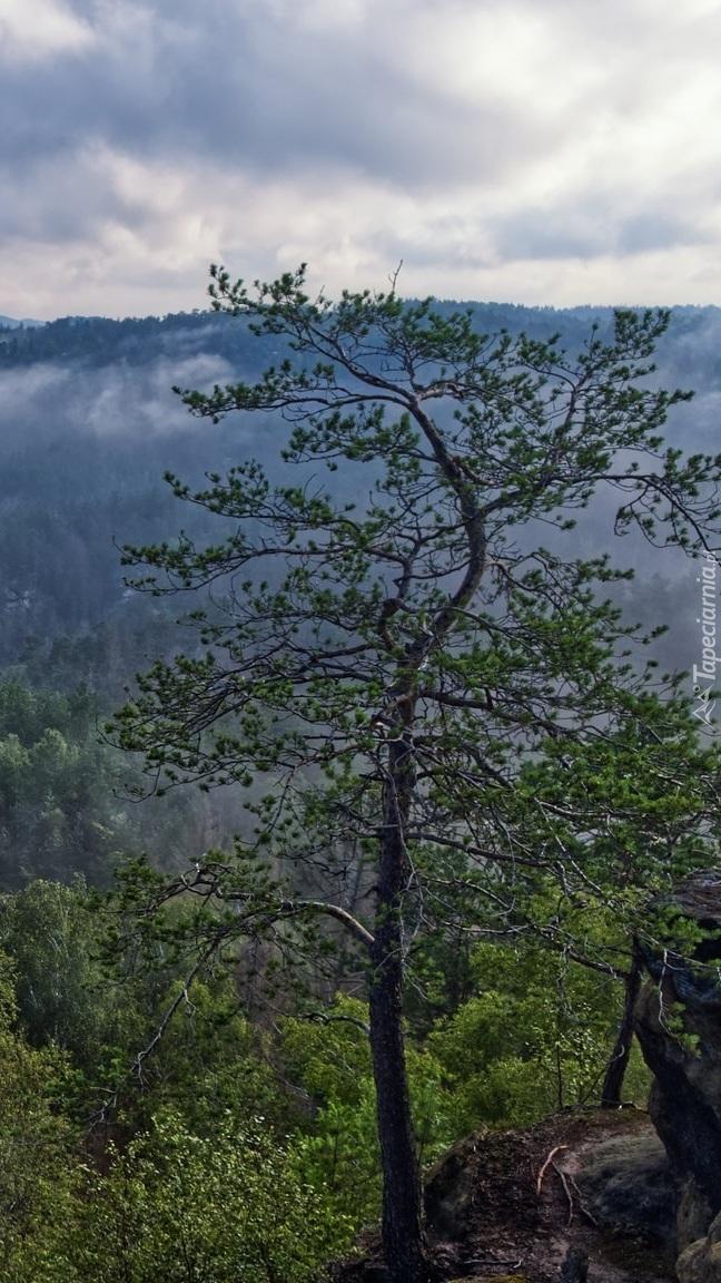 Drzewo na tle mgły nad lasem