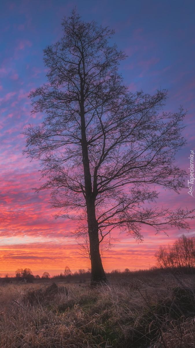 Drzewo na tle wschodzącego słońca