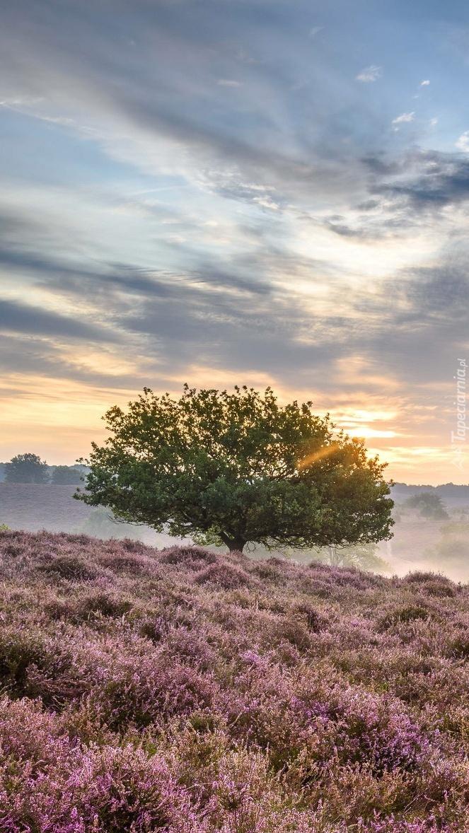 Drzewo na wrzosowisku