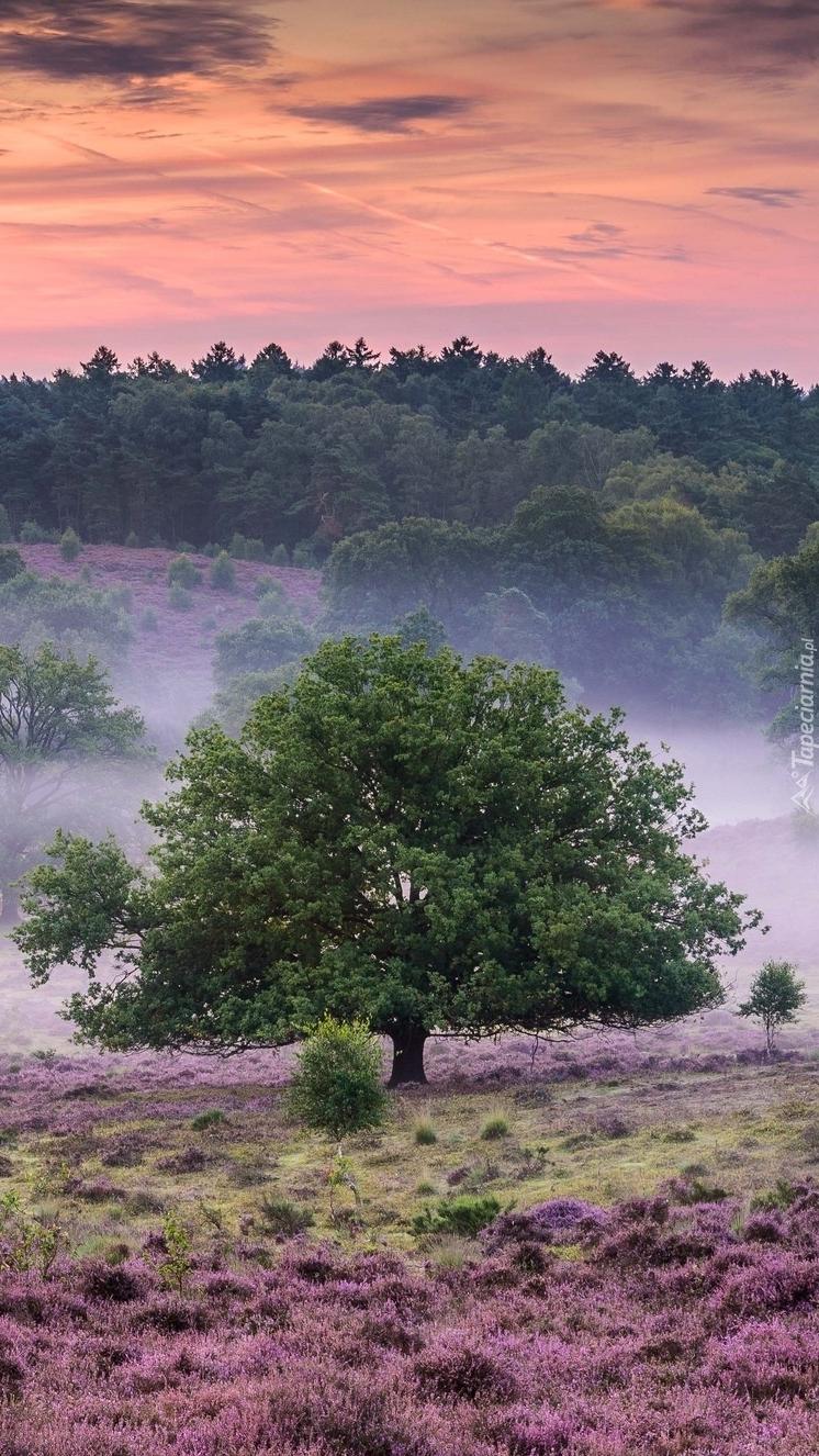 Drzewo na wrzosowisku we mgle