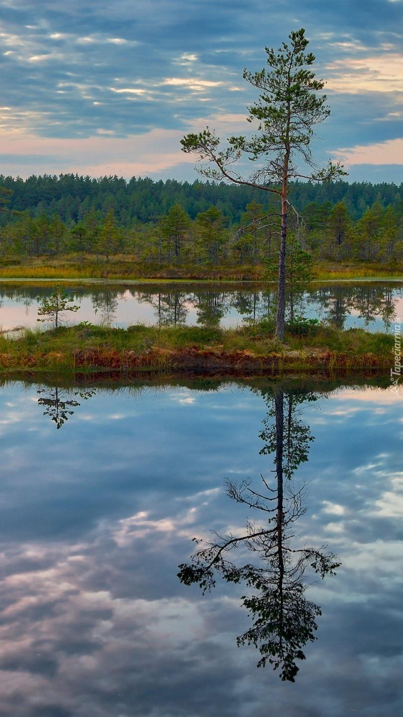 Drzewo na wysepce pośród jeziora