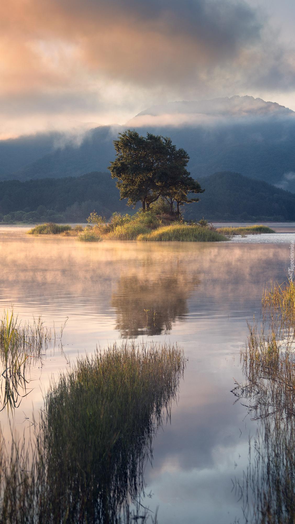 Drzewo na wysepce przy brzegu jeziora