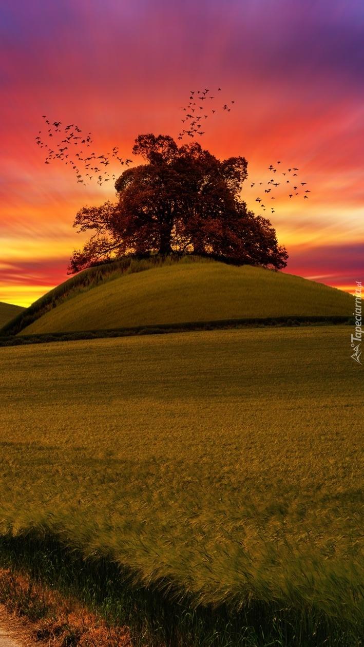 Drzewo na wzgórzu