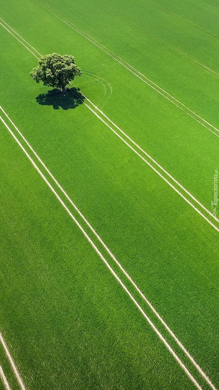 Drzewo na zielonym polu