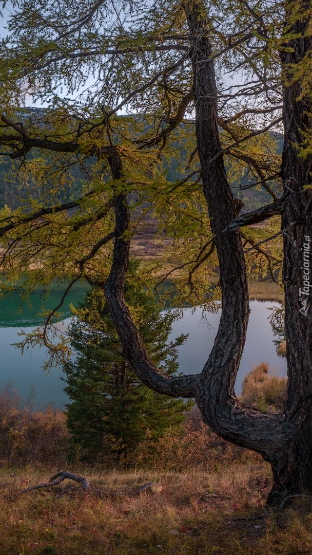 Drzewo nad jeziorem
