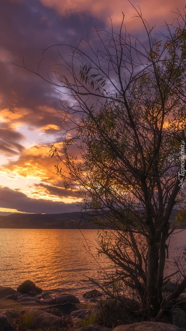Drzewo nad jeziorem Tyrifjorden