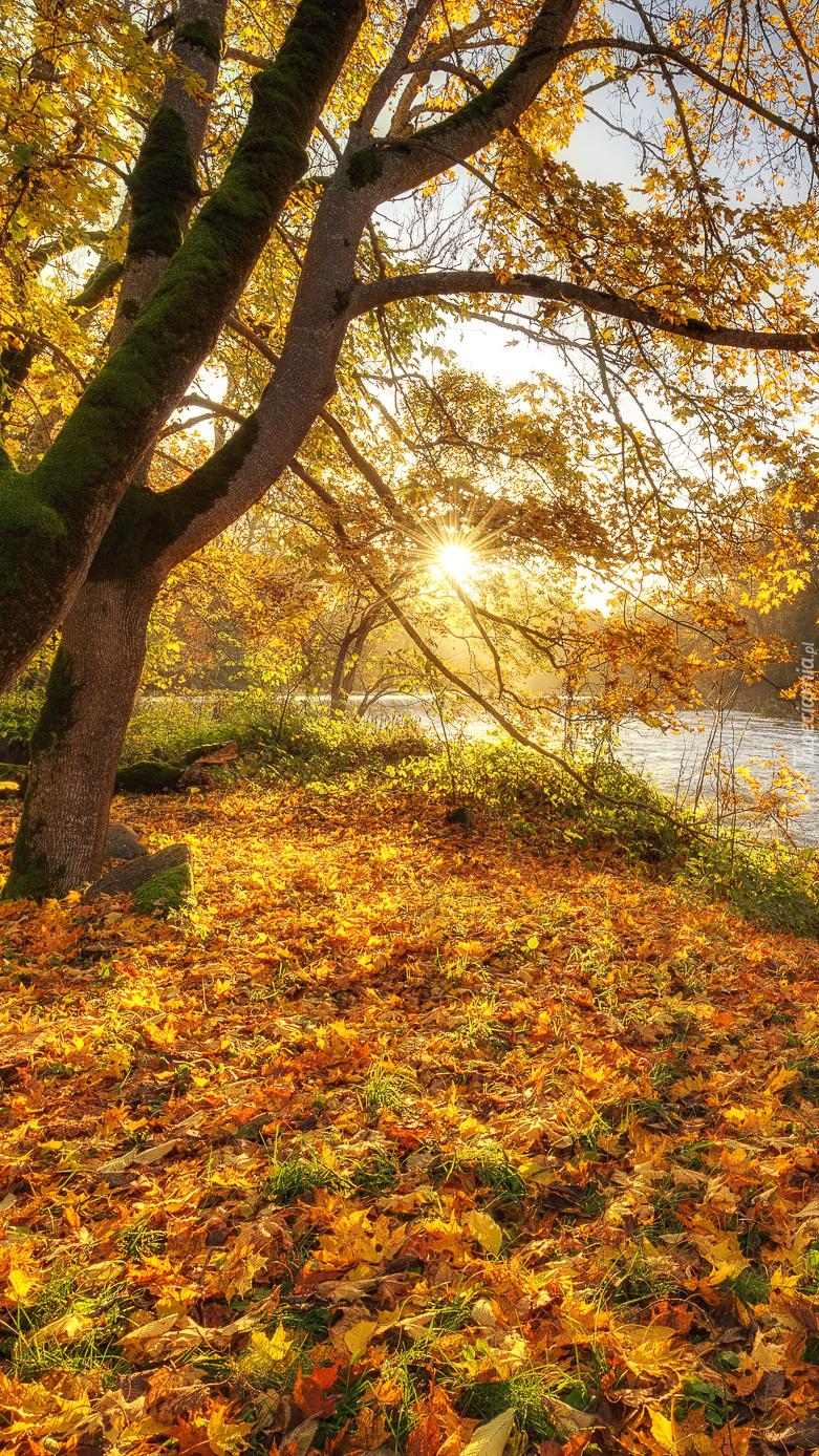 Drzewo nad rzeką