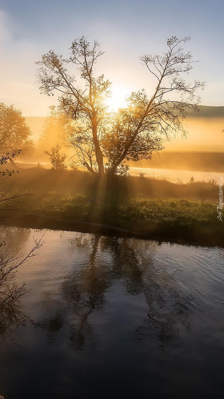 Drzewo nad rzeką w słonecznym blasku