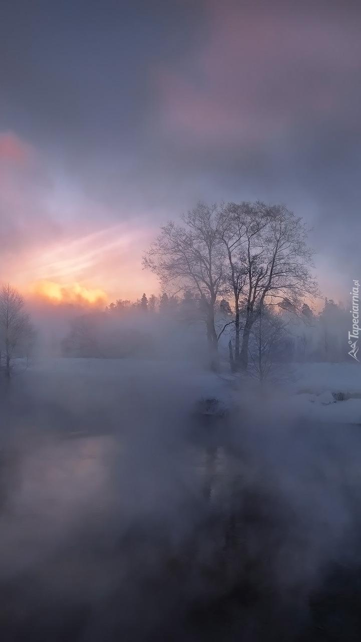 Drzewo nad rzeką we mgle
