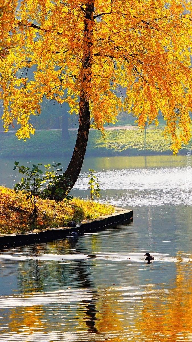 Drzewo nad wodą