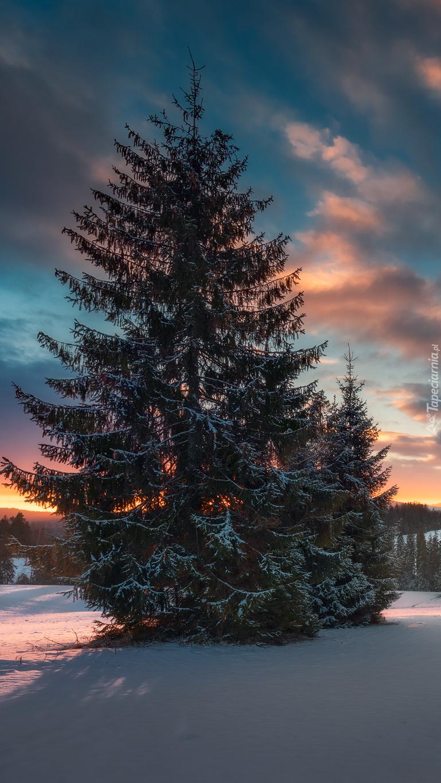 Drzewo o zachodzie słońca zimą