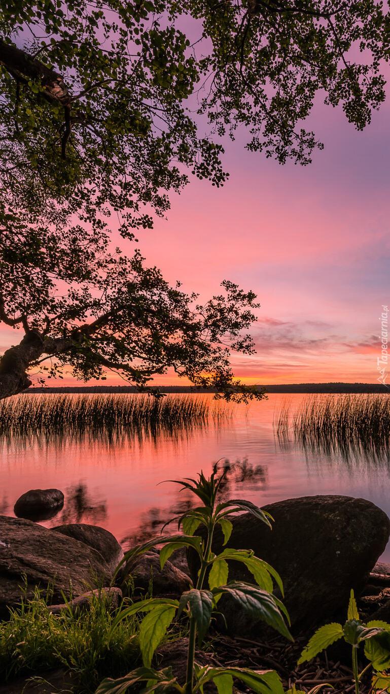 Drzewo obok kamieni na brzegu jeziora