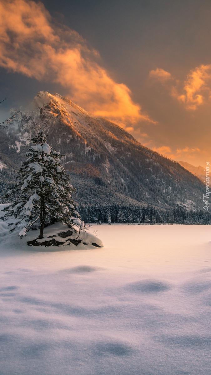 Drzewo oprószone śniegiem na tle gór