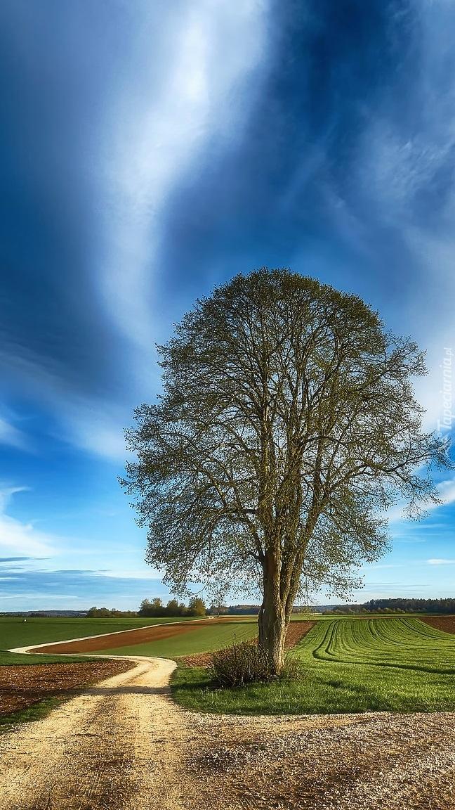 Drzewo przy polnej ścieżce