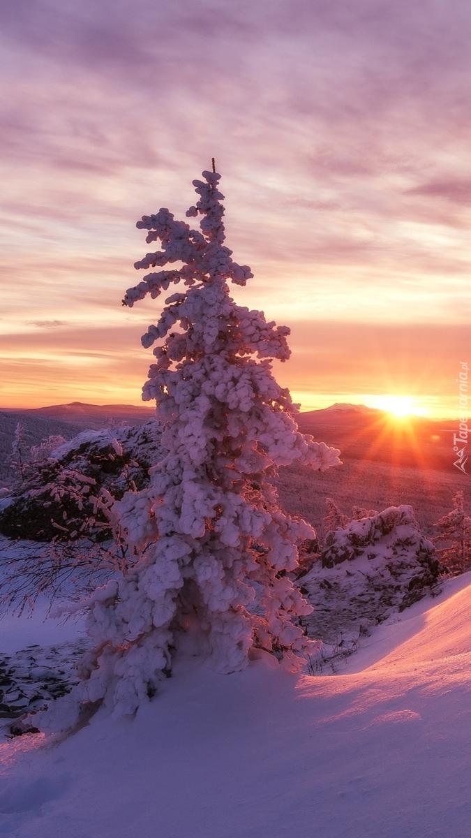 Drzewo w blasku wchodzącego słońca