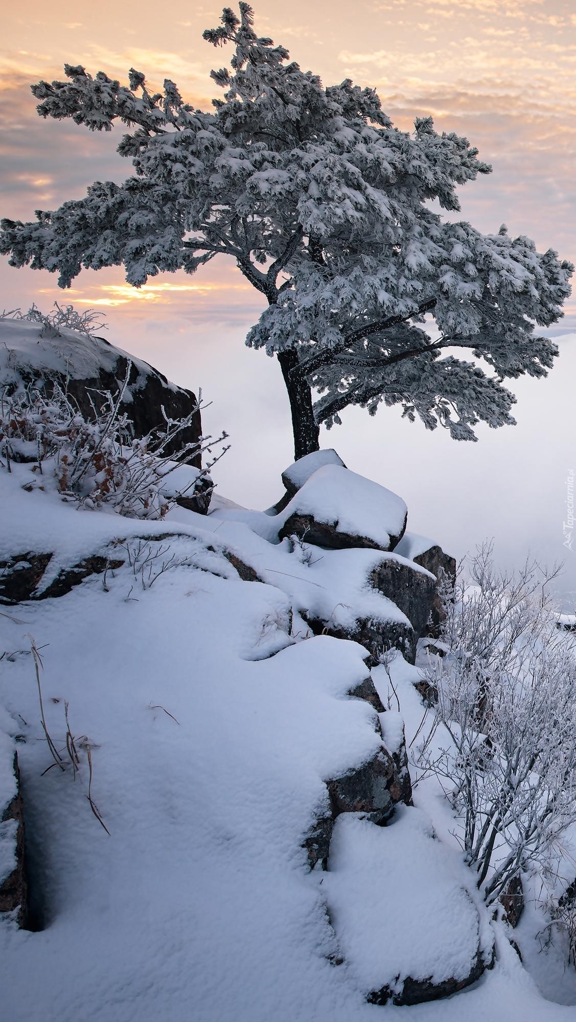 Drzewo w górach