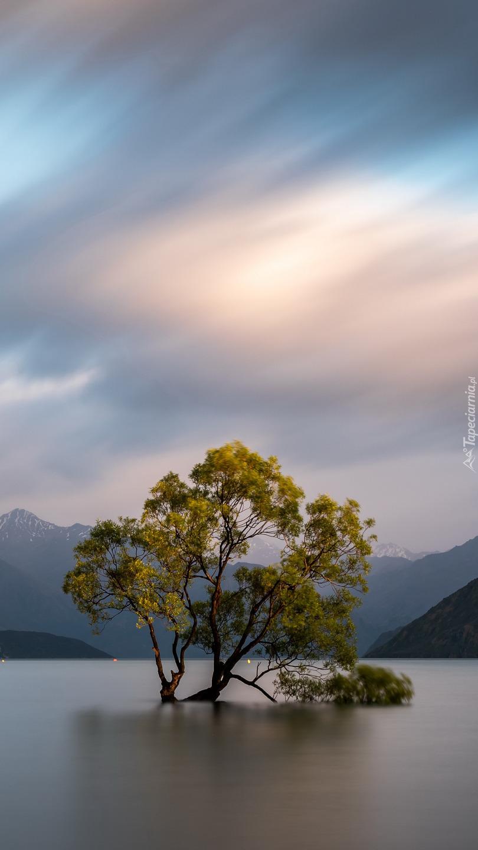 Drzewo w jeziorze Wanaka