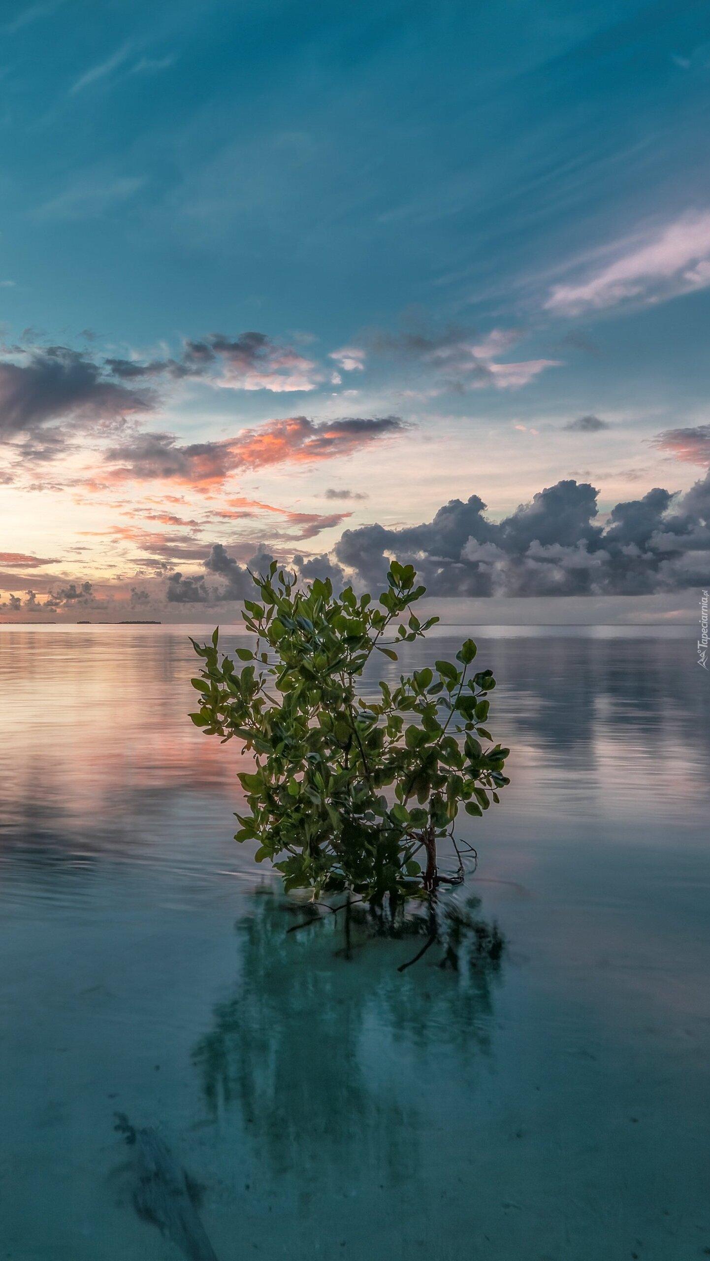 Drzewo w morzu
