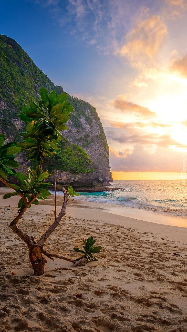 Drzewo w piasku na plaży