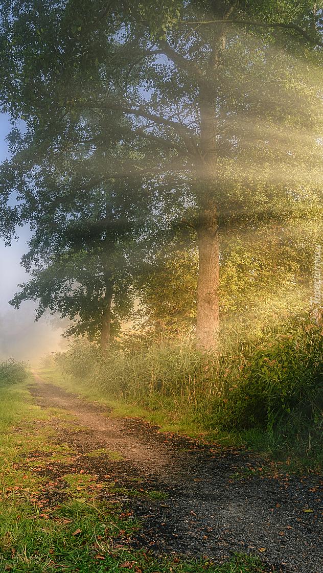 Drzewo w promieniach słońca