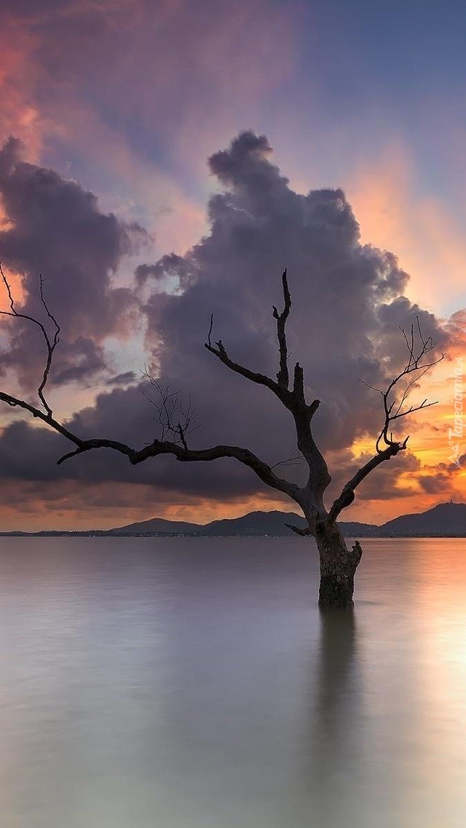Drzewo w wodzie