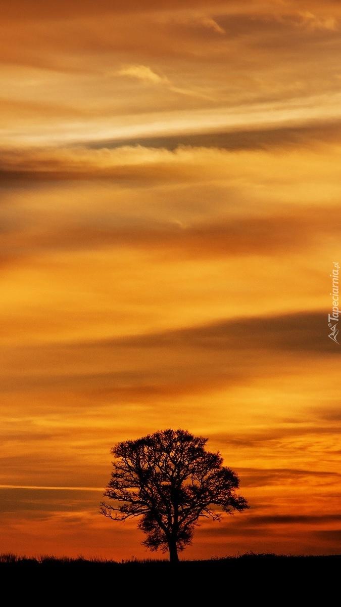 Drzewo w zachodzącym słońcu