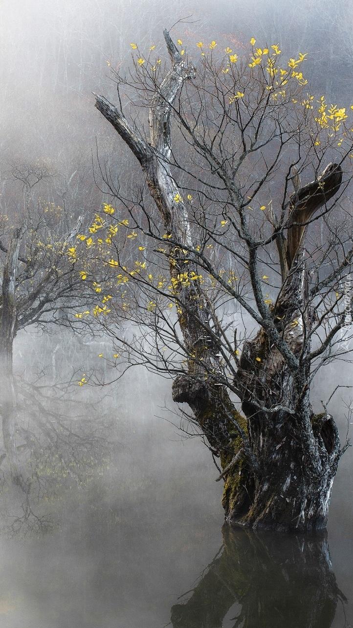 Drzewo w zamglonej rzece