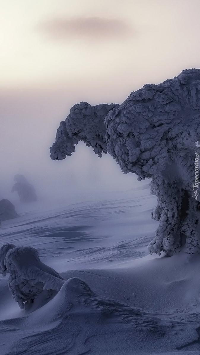 Drzewo w zaspach śnieżnych